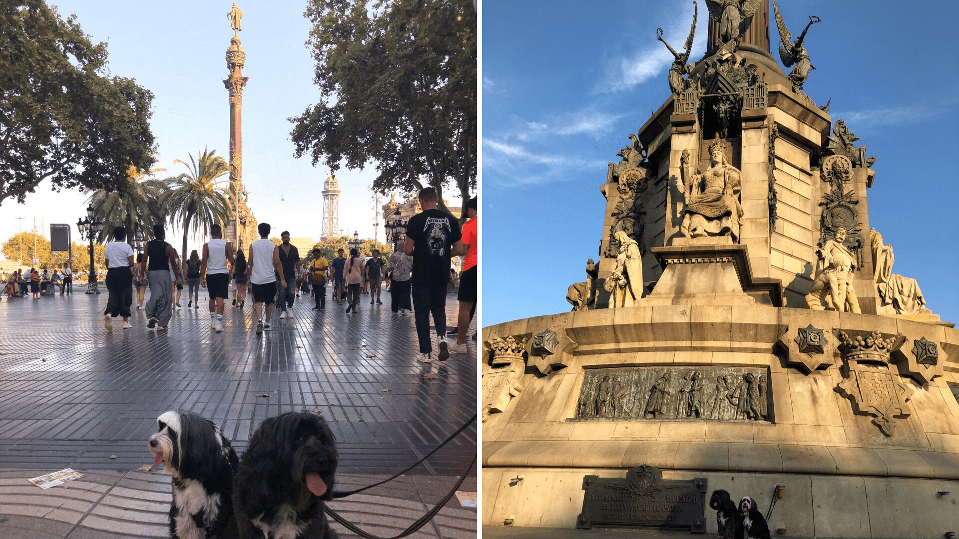 The dogs in Barcelona