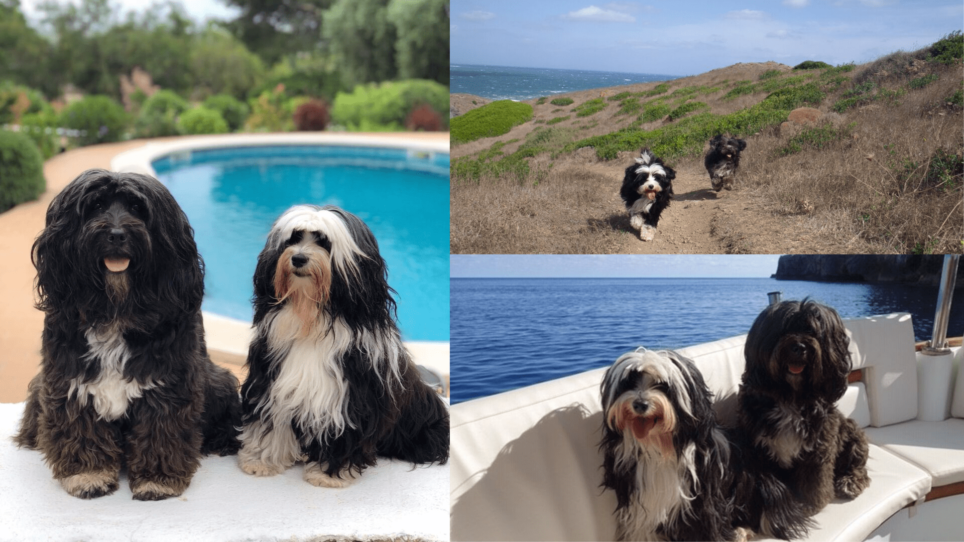 The dogs enjoying their time in Menorca