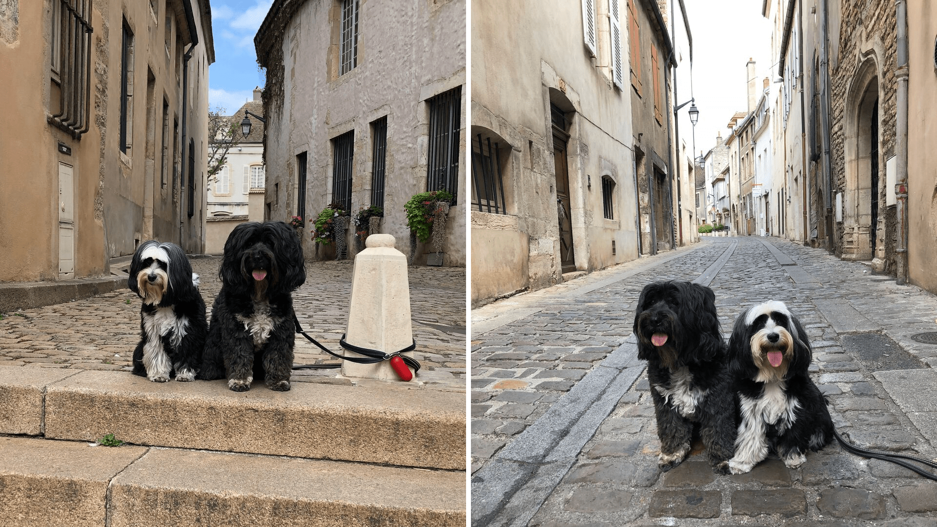 Dogs in small French street